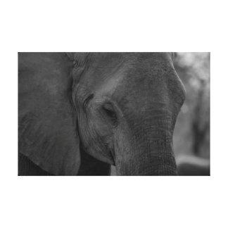 Impressão Em Canvas Elefante