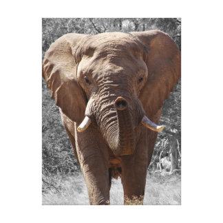 Impressão Em Canvas Elefante africano do arbusto