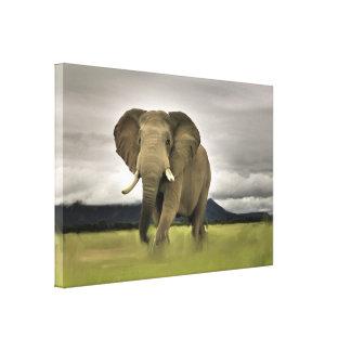 Impressão Em Canvas Elefante original na grama longa