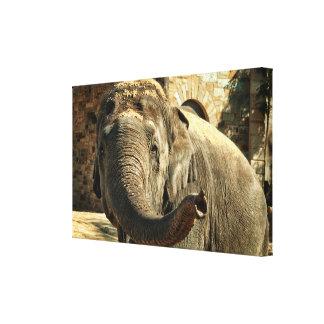 Impressão Em Canvas Elefante que aponta para a frente com o tronco
