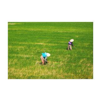 Impressão Em Canvas Fazendeiros vietnamianos