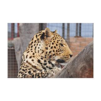 Impressão Em Canvas Fim-acima do leopardo