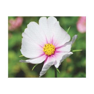 Impressão Em Canvas Flor branca da foto bonita do fim-acima