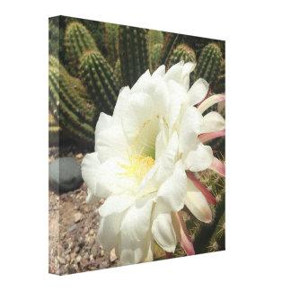 Impressão Em Canvas Flor do deserto