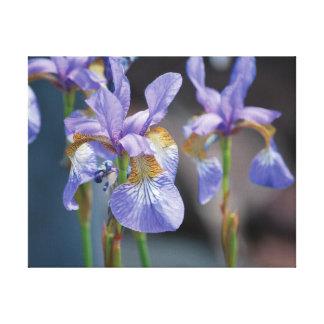 Impressão Em Canvas Flor roxa da foto bonita do fim-acima no azul