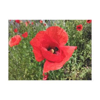 Impressão Em Canvas Flor vermelha da papoila