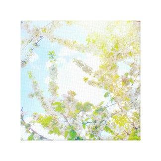 Impressão Em Canvas Flores de cerejeira no Sun