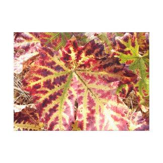Impressão Em Canvas Folha outonal lindo da uva