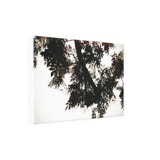 Impressão Em Canvas Folhas de nogueira