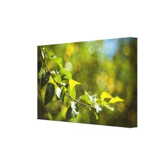 Impressão Em Canvas Folhas e bokeh