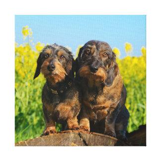 Impressão Em Canvas Foto bonito do animal de estimação de dois amigos