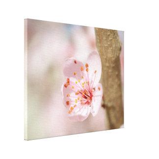 Impressão Em Canvas Foto da natureza do ramo da flor da flor de