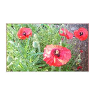 Impressão Em Canvas Foto vermelha 1164 da papoila