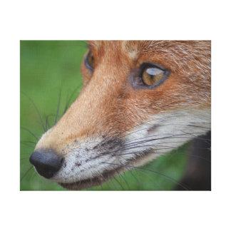 Impressão Em Canvas Fotografia bonita do fim-acima da raposa no jardim