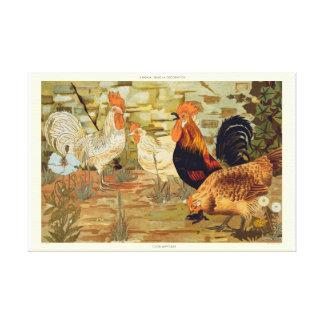 Impressão Em Canvas Galos e galinhas