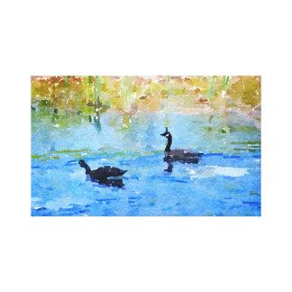 Impressão Em Canvas Gansos canadenses que nadam