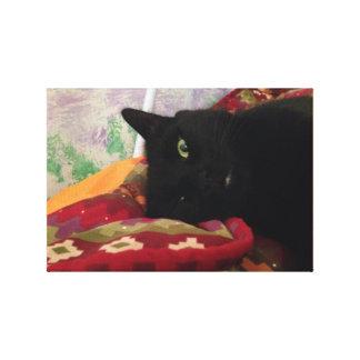 Impressão Em Canvas Gato preto bonito