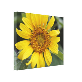 """Impressão Em Canvas Girassol amarelo ensolarado bonito 20"""" x 16"""""""