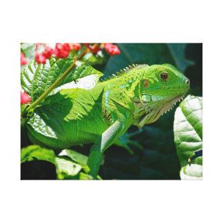 Impressão Em Canvas Iguana