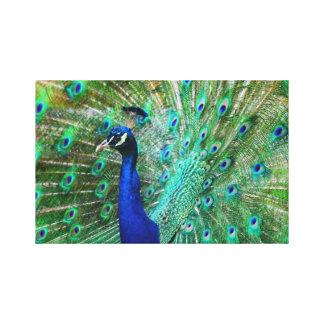 Impressão Em Canvas Imagem excitante do pavão