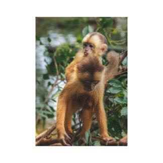 Impressão Em Canvas Jovem macaco na costas da mãe