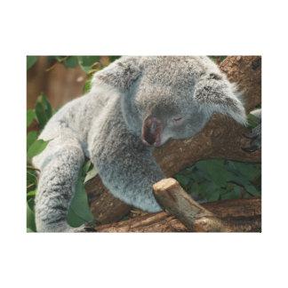 Impressão Em Canvas Koala