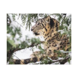 Impressão Em Canvas Leopardo de neve sob Bush nevado