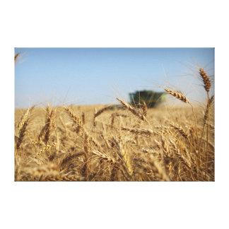 Impressão Em Canvas Liga do verde da colheita do trigo