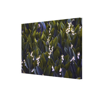Impressão Em Canvas Lírio do remendo da flor do vale com matiz azul