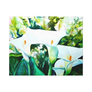 Impressão Em Canvas Lírios de Calla brancos