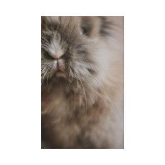 Impressão Em Canvas Little Bunny - Pancake