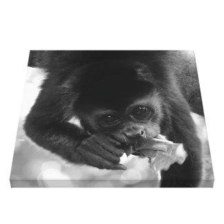 Impressão Em Canvas Macaco de Howler