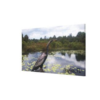 Impressão Em Canvas Nápoles, fim do Snakebird do Anhinga de FL acima