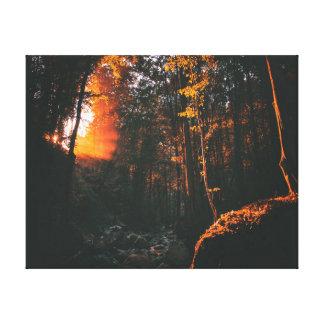 Impressão Em Canvas Nascer do sol da floresta   da fotografia   da