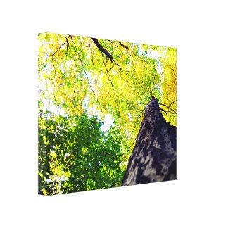 Impressão Em Canvas Natureza vibrante e brilhante