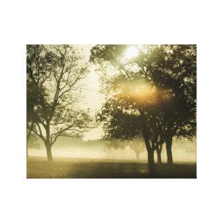 Impressão Em Canvas Névoa da manhã