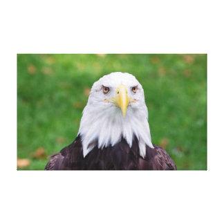 Impressão Em Canvas Olhos de Eagle