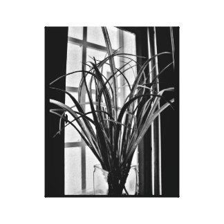 Impressão Em Canvas Opinião da planta da janela