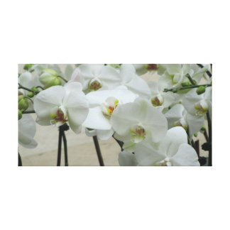 Impressão Em Canvas Orquídea #2