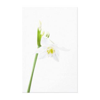 Impressão Em Canvas Orquídea branca bonita