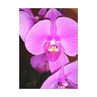 Impressão Em Canvas Orquídea cor-de-rosa do Dendrobium