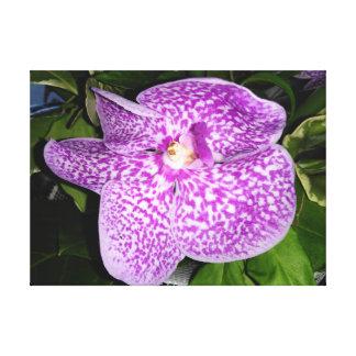 Impressão Em Canvas Orquídea salpicada roxa