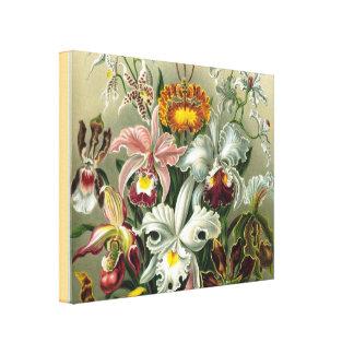 Impressão Em Canvas Orquídeas das belas artes - formas de arte de