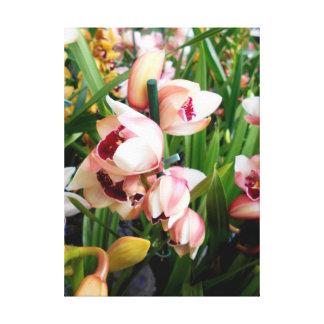 Impressão Em Canvas Orquídeas Pinkish brancas do Cymbidium