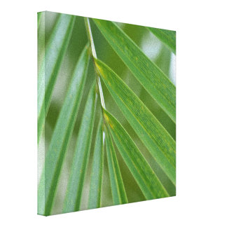 Impressão Em Canvas Palmeira tropical de Havaí