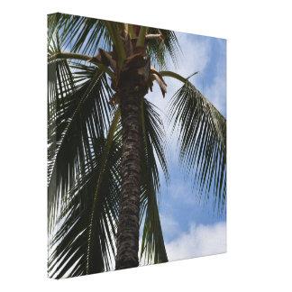 Impressão Em Canvas Palmeira tropical de Kauai