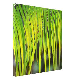 Impressão Em Canvas Palmeira tropical verde em Havaí