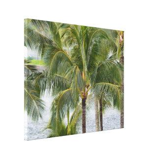 Impressão Em Canvas Palmeiras tropicais em Havaí
