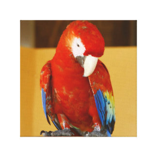 Impressão Em Canvas Papagaio tropical do Macaw vermelho em México