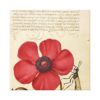 Impressão Em Canvas Papoila vermelha e o inseto